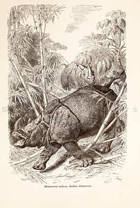 Vintage 1800s Sepia Illustration of Wild Rhinoceros - ANIMATED CREATIONS, J.G. Wood.