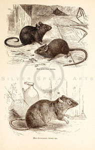 Vintage 1800s Sepia Illustration of Wild Mice and Rat  - ANIMATED CREATIONS, J.G. Wood.