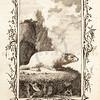 Vintage 1700s Sepia Illustration of a Bobak - NATURAL HISTORY by Count de Buffon.