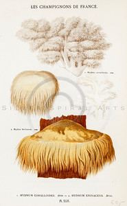 Vintage 1800s Color Illustration of Mushrooms - LES CHAMPIGNONS DE FRANCE, published in Paris, France.