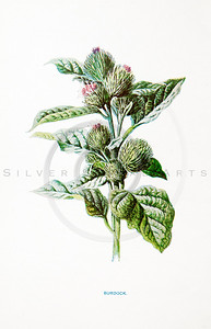 Vintage 1900s Color Lithograph Illustration of Burdock Flower from FAMILIAR WILD FLOWERS by F.E. Hulme.  The natural patina, age-toning, imperfections, and old paper antiquing of this vintage 19th century illustration are preserved in this image.
