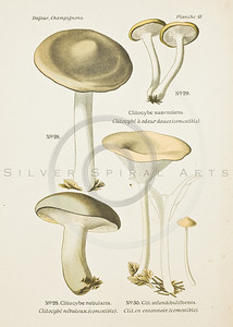 1800s Vintage Color Illustration of mushrooms-- colored lithograph from ATLAS DES CHAMIGNONS COMESTIBLES ET VENENEUX (Atlas of Edible & Poisonous Mushrooms), by L. Dufourin Paris, France in 1891
