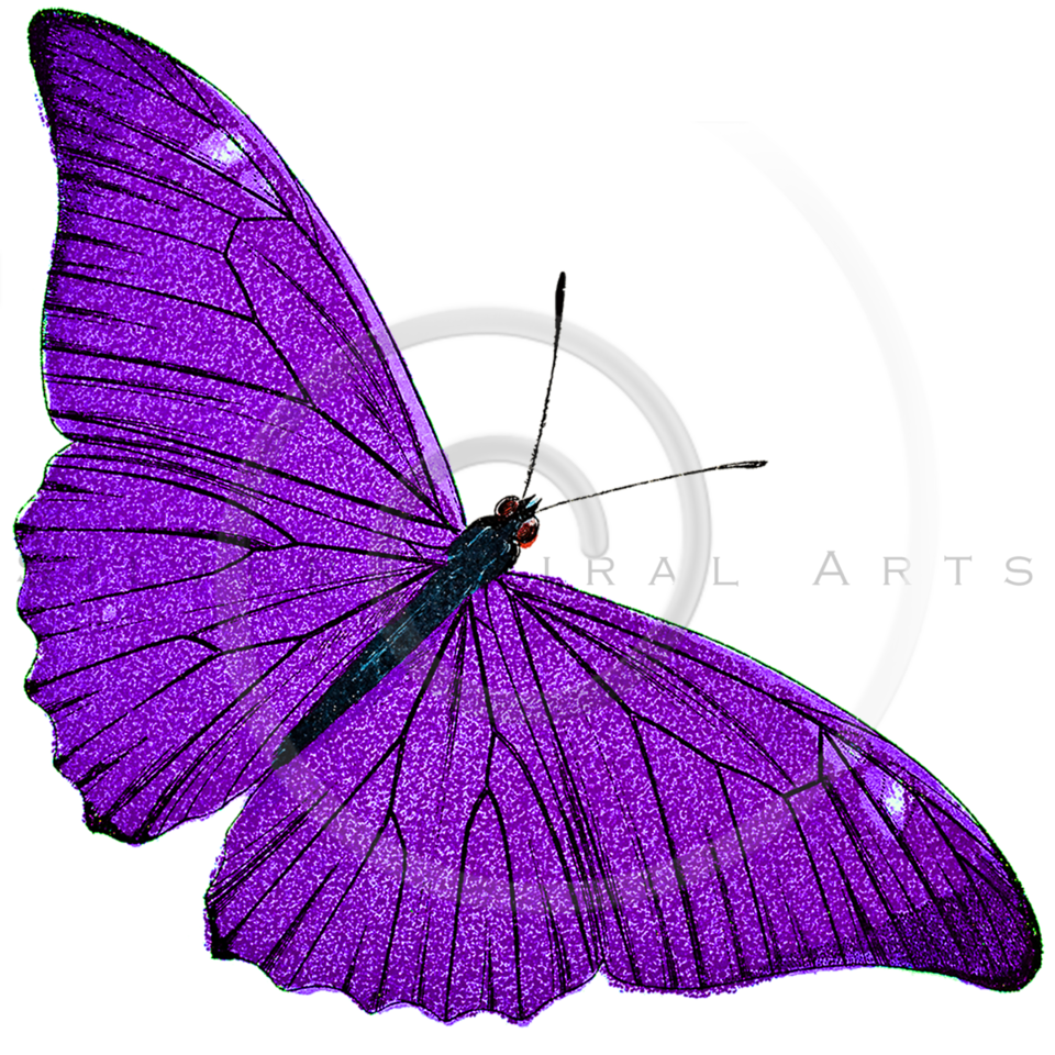 Vintage Purple Butterfly Illustration - 1800s Butterflies.