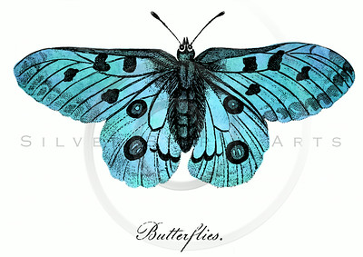 Vintage Light Blue Butterfly Illustration - 1800s Butterflies.