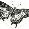 Vintage Sepia Butterfly Illustration - 1800s Butterflies.