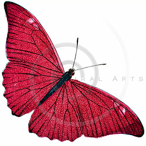 Vintage Pink Butterfly Illustration - 1800s Butterflies.
