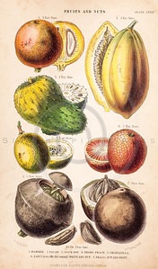 Vintage illustration of Fruit and Nuts from The History of the Vegetable Kingdom by Walter Hood Fitch, 1855. Antique digital download of old print - fruit, nuts, papaya, peach, apple, mammee, Brazil, produce, food, color.  The natural age-toning, paper stains, and antique printing imperfections are preserved in this 1800s stock image.