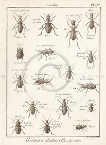 Vintage Illustration of Beetles and Insects from Histoire Naturelle by Benard Direxit, 1800.  Antique digital download of old print - beetle, insects, bugs, natural, nature, insect, bug, animal, nature, encyclopedia, encyclopedic.  The natural age-toning, paper stains, and antique printing imperfections are preserved in this 1800s stock image.