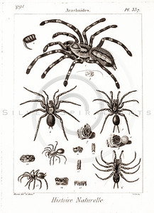Vintage 1700s Sepia Insect Illustration of Spiders from HISTOIRE NATURELLE by De Seve.  The natural patina, age-toning, imperfections, and old paper antiquing of this vintage 18th century illustration are preserved in this image.