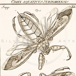 """Vintage BW  Illustration of 1700s Dutch insect engraving from """"THE NATURAL HISTORY OF INSECTS"""", (""""DE NATUURLYKE HISTORIE DER INSECTEN"""") by Rosel (1764)"""