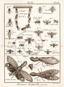 Vintage Illustration of Flies, Moths, Wasps, and Insects from Histoire Naturelle by Benard Direxit, 1800.  Antique digital download of old print - moth, moths, fly, flies, wasp, wasps, bee, bees, natural, nature, insect, bug, animal, nature, encyclopedia, encyclopedic.  The natural age-toning, paper stains, and antique printing imperfections are preserved in this 1800s stock image.