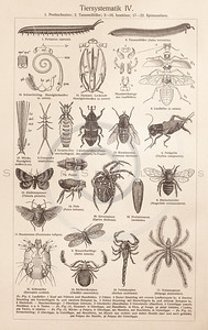 Vintage sepia illustration of insects and bugs from Meyers Konversations Lexikon 1913 Encyclopedia.  Antique digital download of old print - insect, bugs, fly, spider, animal.  The natural age-toning, paper stains, and antique printing imperfections are preserved in this 1900s stock image.