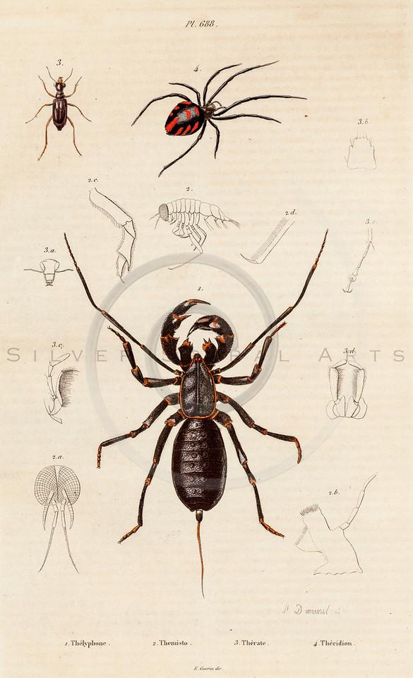 Vintage 1800s Color Illustration of Bugs - DICTIONNAIRE PITTORESQUE D'HISTOIRE NATURELLE by F.E. Guerrin.