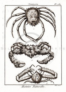 Vintage 1700s Sepia Illustration of Crustaceans from HISTOIRE NATURELLE by De Seve.  The natural patina, age-toning, imperfections, and old paper antiquing of this vintage 18th century illustration are preserved in this image.