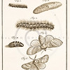 "Vintage BW  Illustration of 1700s Dutch insect engraving from ""THE NATURAL HISTORY OF INSECTS"", (""DE NATUURLYKE HISTORIE DER INSECTEN"") by Rosel (1764)"