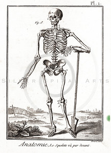 Vintage 1700s Sepia Anatomy Illustration of a Human Skeleton from ENCYCLOPEDIE RAISONNE DES SCIENCES by Diderot.  The natural patina, age-toning, imperfections, and old paper antiquing of this vintage 18th century illustration are preserved in this image.