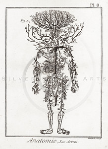 Vintage 1700s Sepia Anatomy Illustration of Human Veins and Arteries Diagram from ENCYCLOPEDIE RAISONNE DES SCIENCES by Diderot.  The natural patina, age-toning, imperfections, and old paper antiquing of this vintage 18th century illustration are preserved in this image.