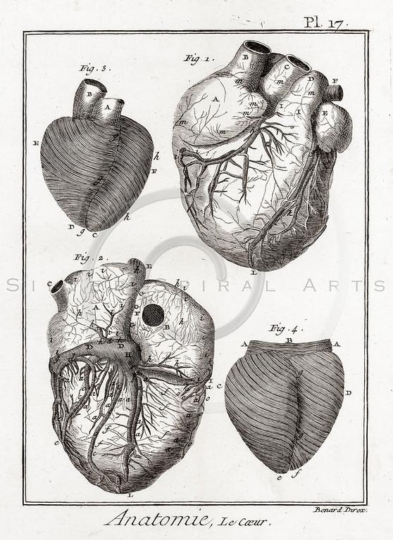 All Vintage Medical Medicine Anatomy and Skeletons - silverspiralarts