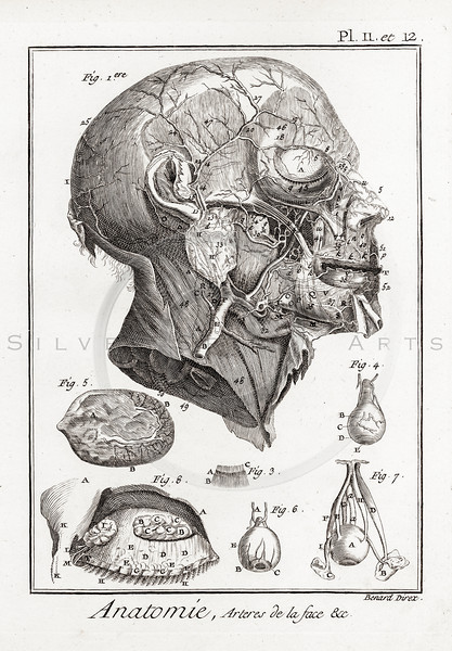 All Vintage Medical Medicine Anatomy and Skeletons - silverspiralarts