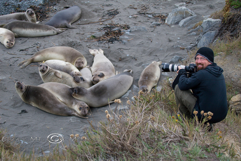 Shooting from the Bluff above the Elephant Seals on San Simeon Beach - VW Surfari - Photo by Cindy Bonish