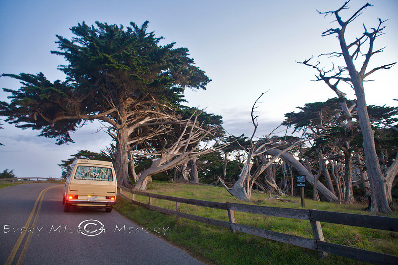 17 Mile Drive through Pebble Beach and the Gnarly Cypress Forest - VW Surfari - Photo by Pat Bonish