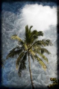 Vintage Coconut Tree.