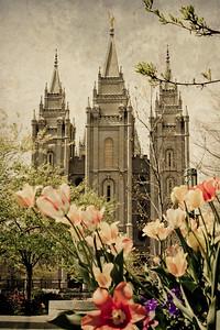 Salt Lake #11