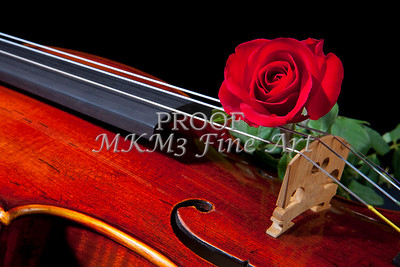 Violin and Red Rose 0387
