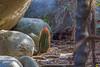 _IMG_8386  Turk's Cap Cactus