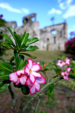 "Beautiful flowers and 18th century sugar mill ruins at the famous Caneel Bay resort.   We spent a day at Caneel Bay enjoying the beachside bar, ultra calm beach, and friendly people. We were continually surprised at how friendly everyone was during the trip. We met more people in one trip to the USBVI's than we've met in nearly 10 trips to Hawaii. Most of the people we met were ""regulars"" and spend at least a week every year coming down to paradise. I think they're on to something...."