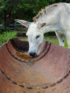 Donkey Eating