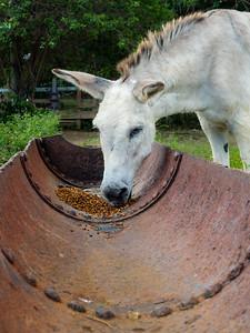 Donkey Life-St. Croix