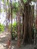 Fun trees!
