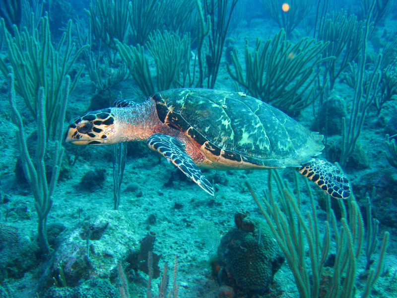 Lovely sea turtles.