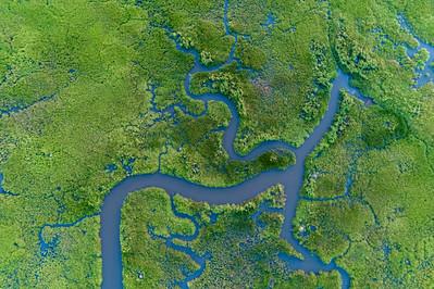 Pamunkey River Marshland