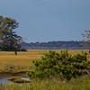 Chincoteague ponies in the field - Chincoteague Island, VA