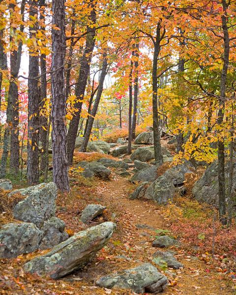 Hiking the Appalachian Trail on Tinker Mountain, Botetourt County