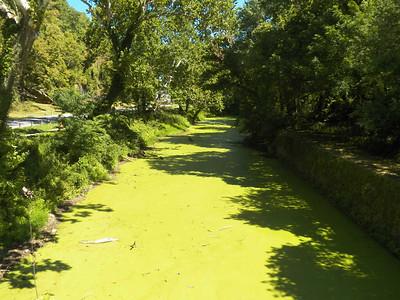 Shenandoah Canal, August 2015
