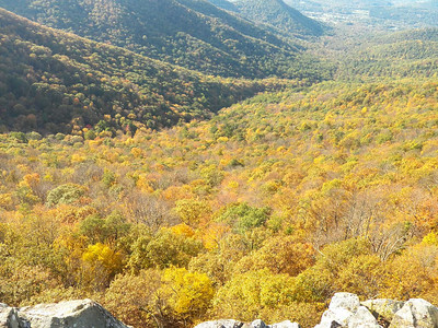 colorful trees at Crescent Rock overlook