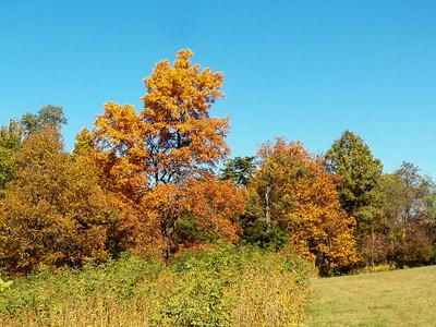 trees, Dickey Ridge Visitor Center