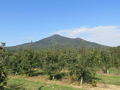 apple trees and Flat Top Mountain