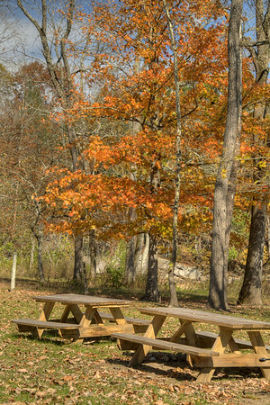 A splash of brilliant fall color near some picnic tables by the river at Alvarado Station in Abingdon, VA on Monday, October 27, 2014. Copyright 2014 Jason Barnette