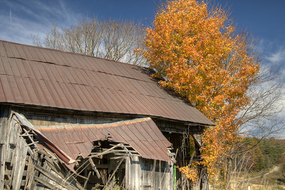 A brilliant orange tree stands beside a crumbling barn in Abingdon, VA on Monday, October 27, 2014. Copyright 2014 Jason Barnette