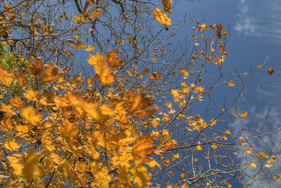 A few remaining fall leaves in Abingdon, VA on Monday, October 27, 2014. Copyright 2014 Jason Barnette