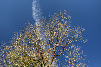 A bare tree under a big blue sky during the fall in Abingdon, VA on Monday, October 27, 2014. Copyright 2014 Jason Barnette