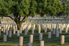 A large trees casts shade over rows of grave markers at Arlington National Cemetery in Arlington, VA on Monday, August 17, 2015. Copyright 2015 Jason Barnette