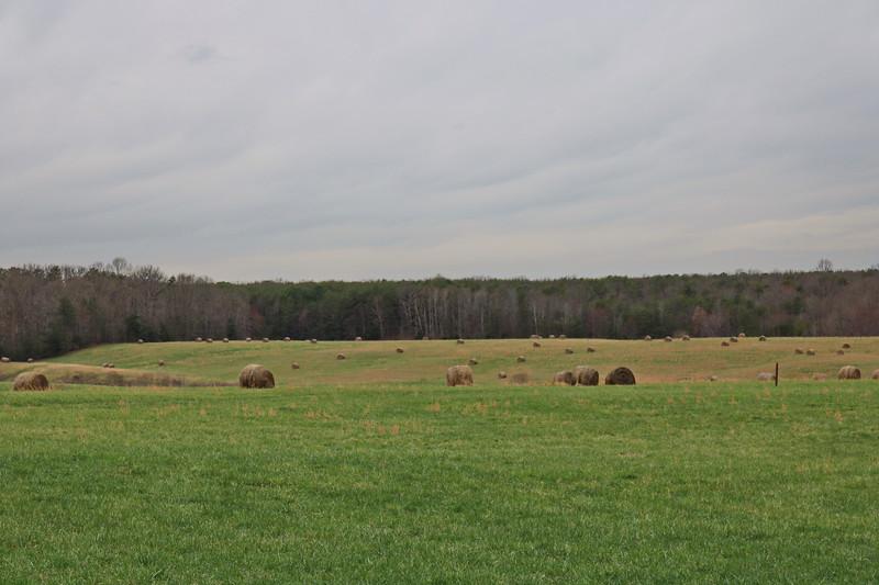 McLaw's Trail 8