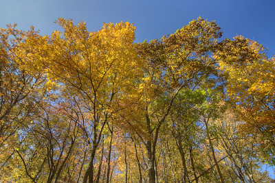 Bright sunlight shines through the fall foliage along Corder Town Road (State Route 664) in Dungannon, VA on Saturday, October 25, 2014. Copyright 2014 Jason Barnette