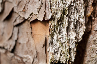 Macro shot of bark along the Bald Cypress Trail at First Landing State Park in Virginia Beach, VA on Wednesday, August 19, 2015. Copyright 2015 Jason Barnette