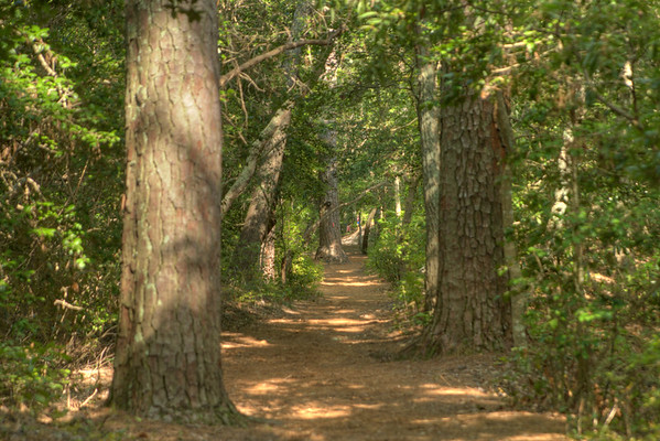 The natural portion of the Bald Cypress Trail at First Landing State Park in Virginia Beach, VA on Wednesday, August 19, 2015. Copyright 2015 Jason Barnette